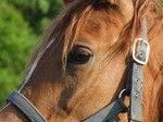 cheval,findus,traçabilité,agroalimentaire